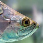 rybie oko a malowanie proszkowe